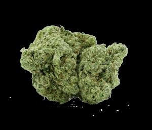 Gorilla Glue (1)